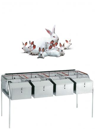 Gabbia conigli fattrici F4 - 1