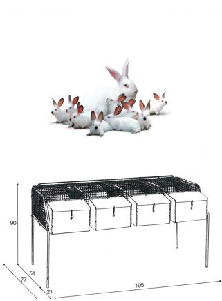 Gabbia conigli fattrici F4