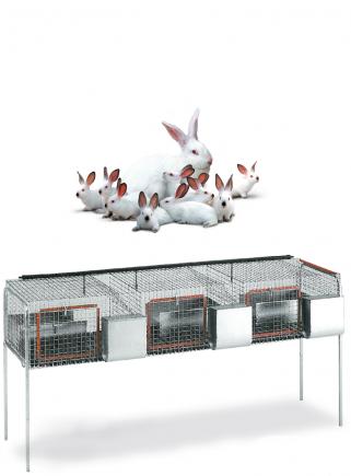 Gabbia conigli fattrici F3 Bis - 2