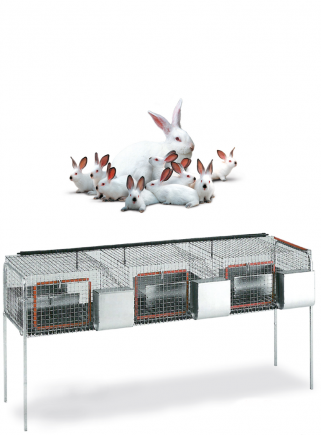 Rabbit cage for mares F3 - 2