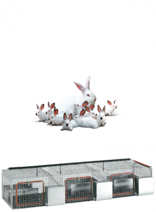 copy of Cage for rabbits mares F3 - 1
