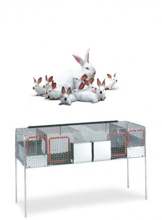 Gabbia conigli fattrici F1 - 1
