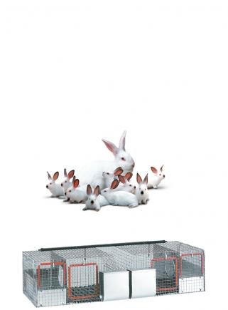 Cage for rabbits mares 2N basket - 1