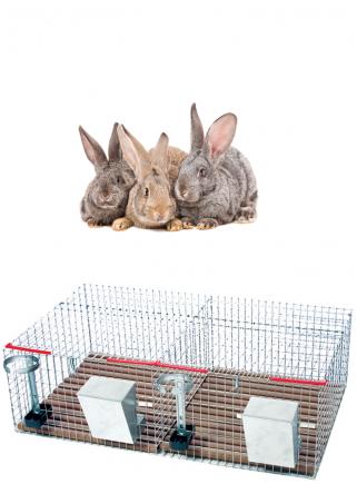 Gabbia conigli cesto 2 box