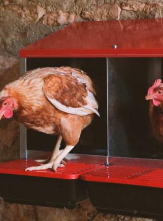 Open PLATIN hen nest - 7