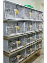 Abbeveratoio Pajaros automatico con posatoio - 4