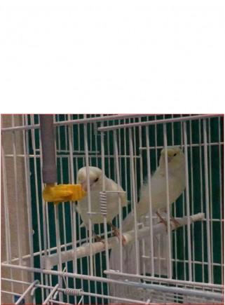 Abbeveratoio Acuabird autom. con posatoio - 5