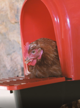 Nido per galline 1 foro in plastica - 5