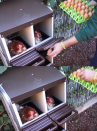 Chicken nest 1 compartment and supports - 2