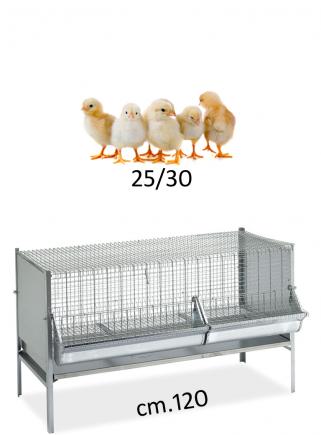 Gabbia polli/pulcini cm.120x50 - 1