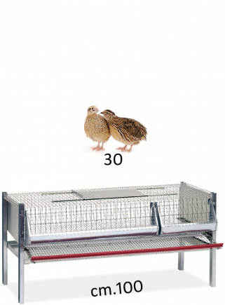 Cage for laying quails 100 - 1 cm