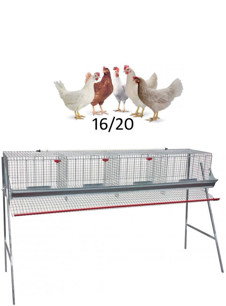 Gabbia galline cm.210 ad 1 piano - 1