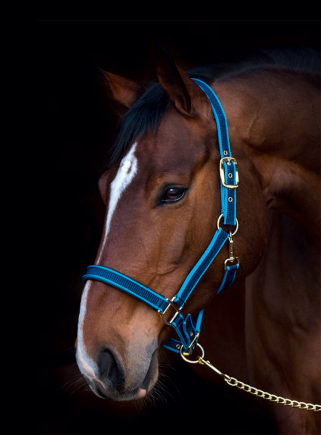Foal EXCLUSIVE nylon halter - 1