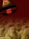 Lampada infrarossi watt 150 Philips - 3