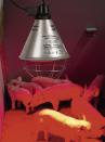 Lampada infrarossi watt 150 Philips - 6