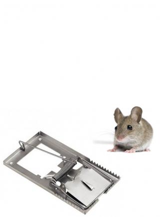 Snap mouse trap