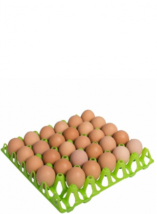 Plastic tray container 30 eggs - 4