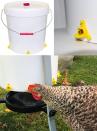 copy of Abbeveratoio automatico per avicoli COPAVI - 2